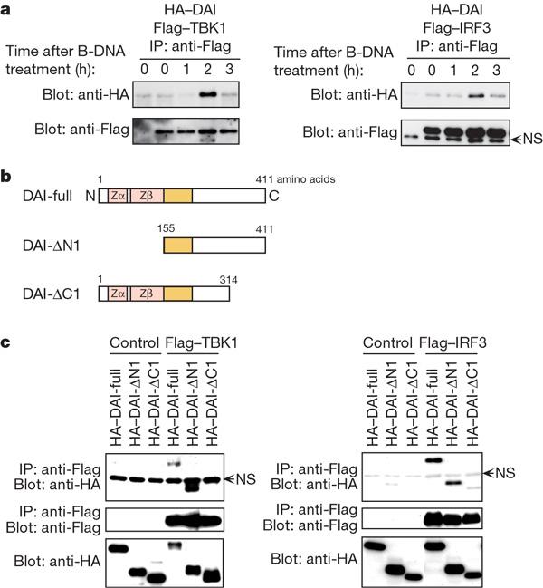 PPM1A silences cytosolic RNA sensing and antiviral defense through